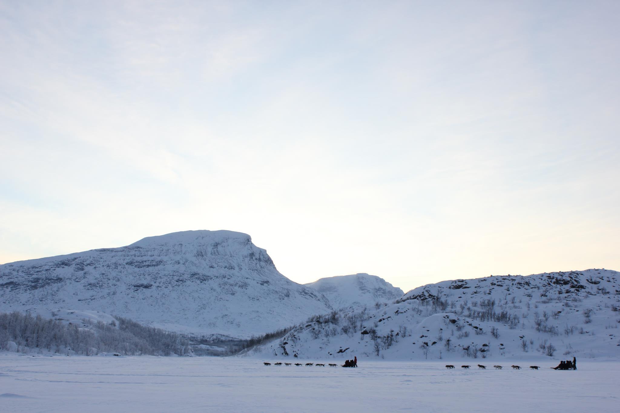 Charming Holiday, Abisko, Sweden, Dogsled