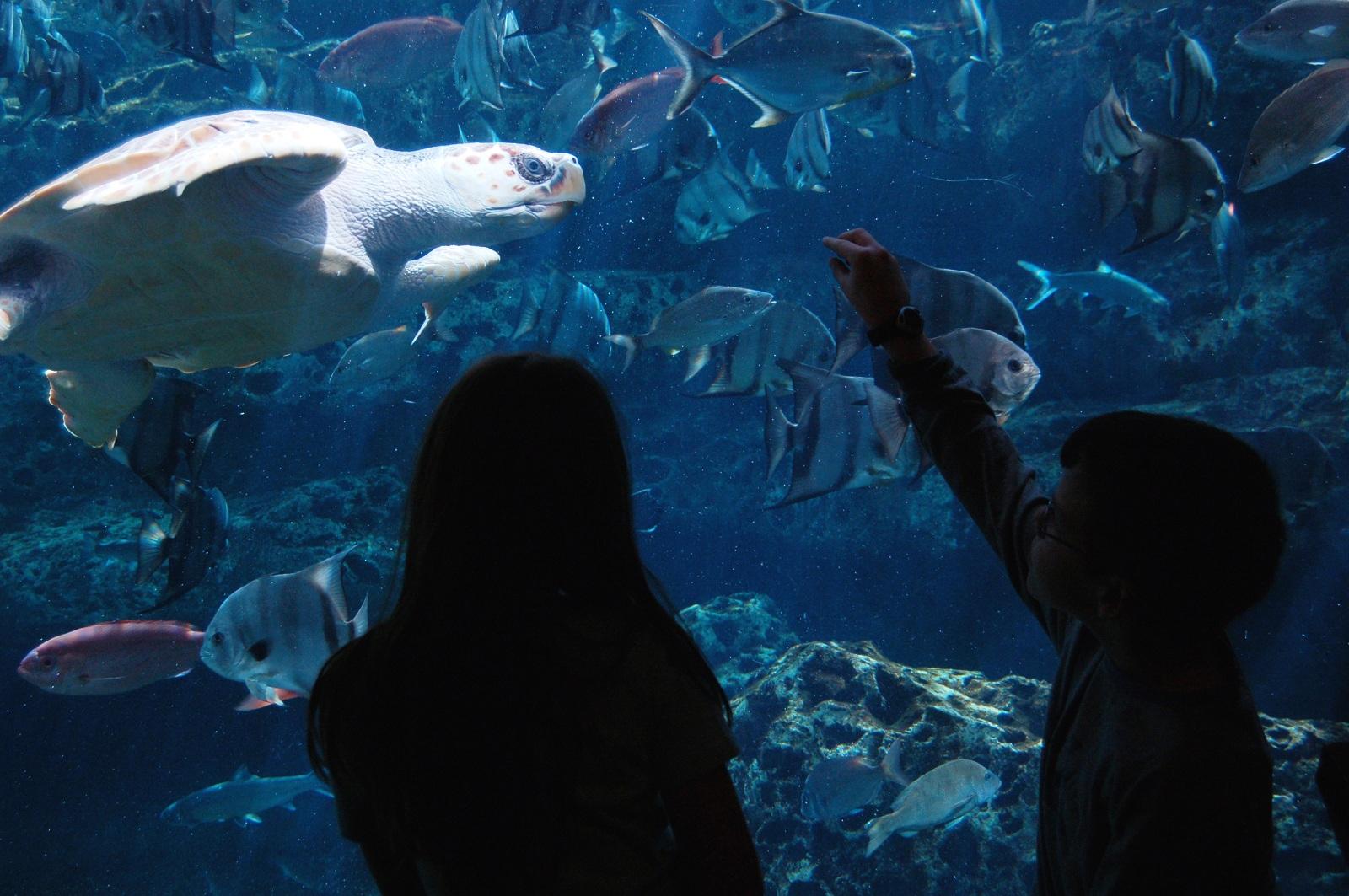 Georgia Aquarium Atlanta Georgia Usa Sea Turtle