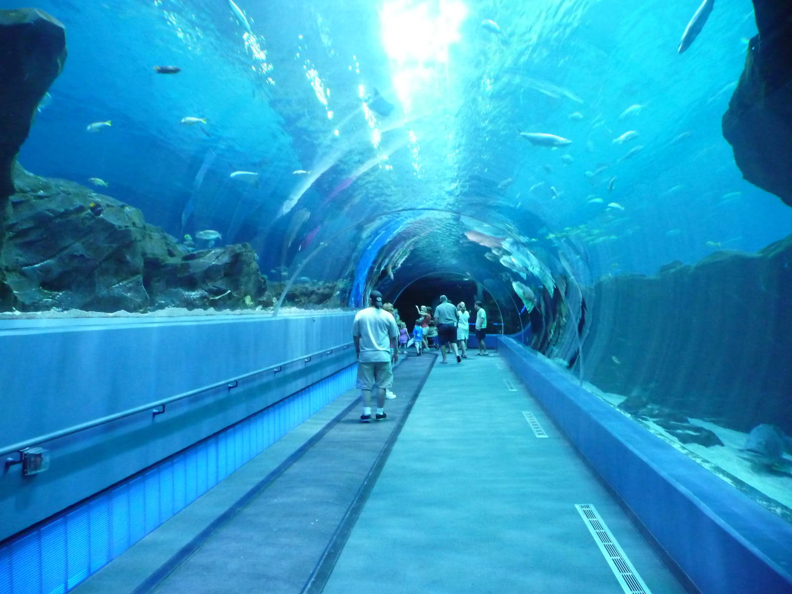 Georgia aquarium atlanta georgia usa underwater tunnel