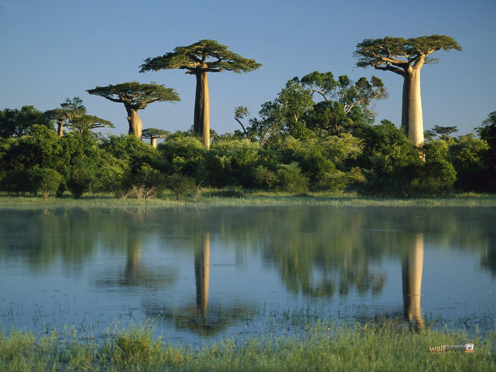 Africa images Madagascar wallpaper and background photos (1699543)