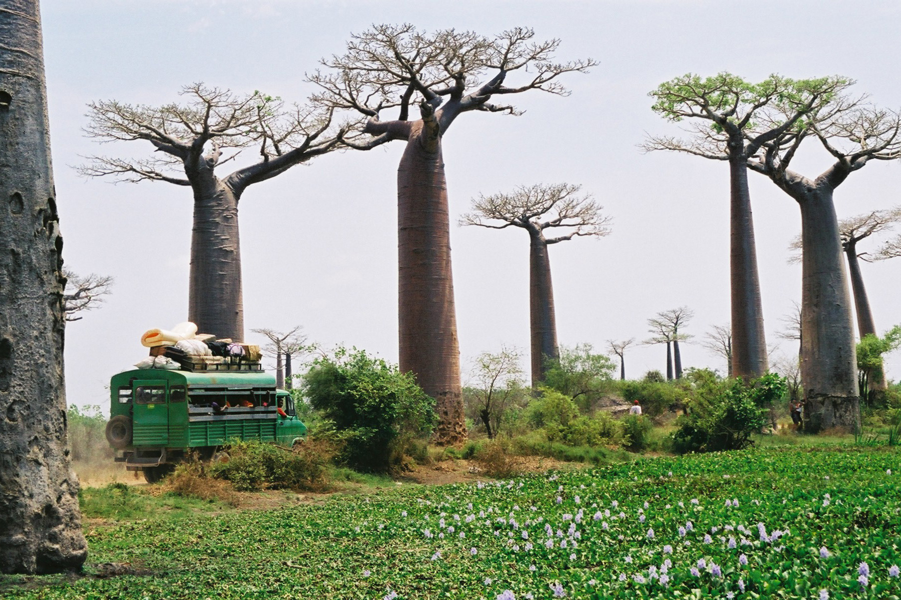 Madagascar - Republic of Madagascar - Country Profile - Republique ...