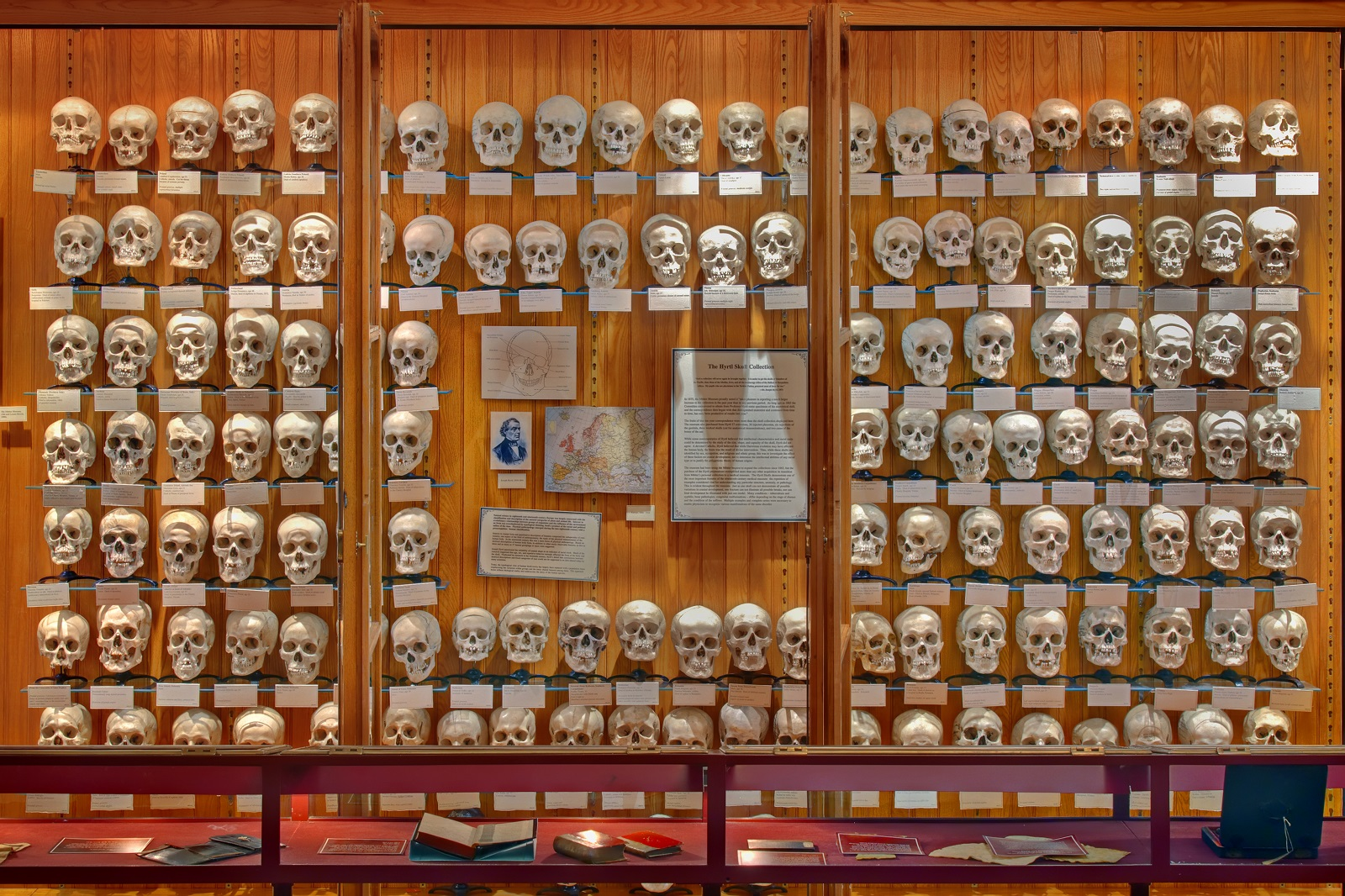 Museums Mutter Museum Philadelphia USA Informative Wall Of Skulls - Strangest museums in usa
