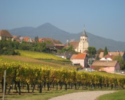 Hiking Routes, France, Europe, Alsace Wine Trail, Vineyard view