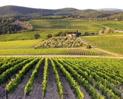 Paradise Destination, Italy, Chianti winery view