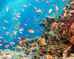 Perfect Cruise Holiday, The Great Barrier Reef, Marine life details