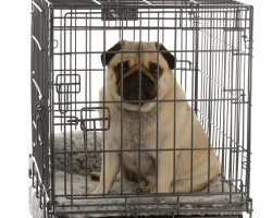 Pet Carrier Airline Approved, Metal Cage presentation