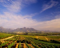 Stellenbosch, South Africa, Vineyards