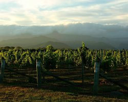 Marlborough, New Zealand, Vineyard under the clouds