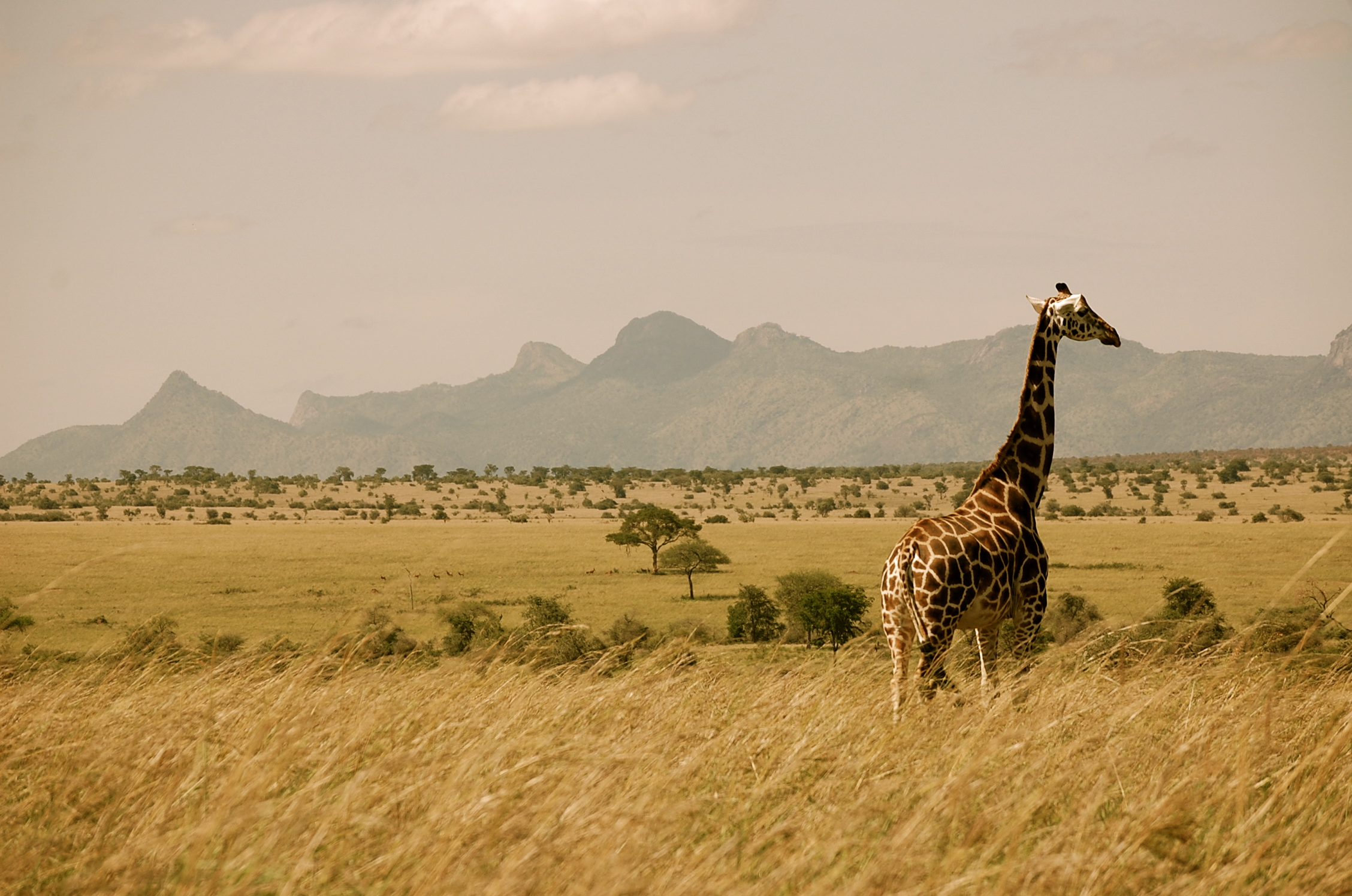 The disappearing of the savana, a photo from Rift Valley, West ...
