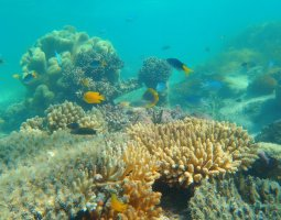 Great Barrier Reef, Australia, Corals and fish01