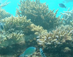 Great Barrier Reef, Australia, Brown Corals and Fish