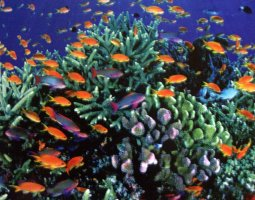 Great Barrier Reef, Australia, Colorful fish and corals