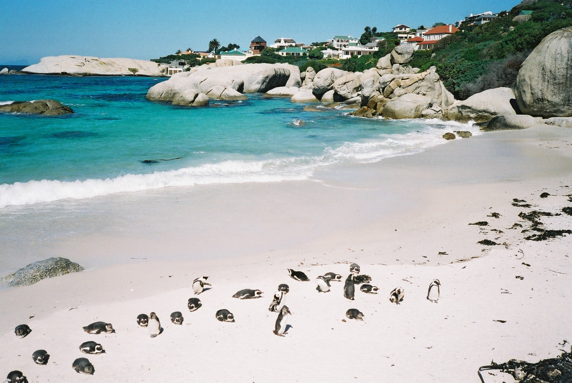 Western Cape South Africa Penguins At Boulders Beach Overview